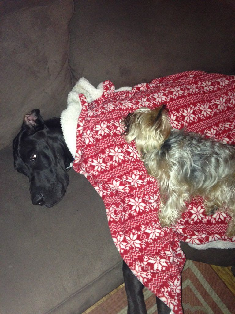 RT @minikenzi2xx: i made my yorkie lay with my great dane and now he wont leave https://t.co/R4O62TgvZK