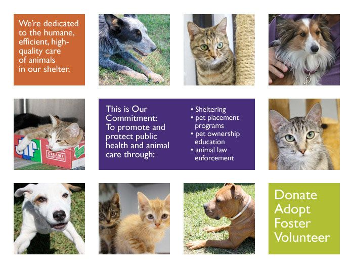 Donate Adopt Foster Volunteer With Images Animal Law Pet Ownership Cat Shelter