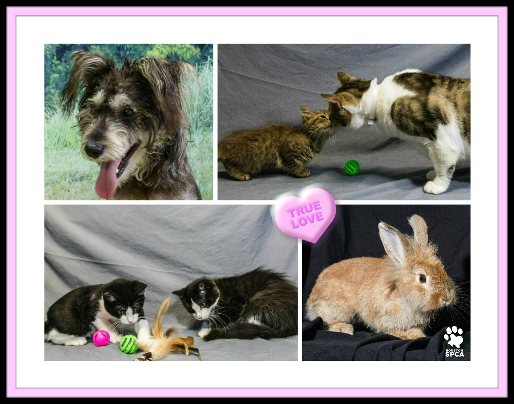 From August 15 August 17 All Kittens Cats Dogs Excluding Those In The Spot Peabody Room And Rabbits Are Available For 10 Kittens Adoption Stories Dogs