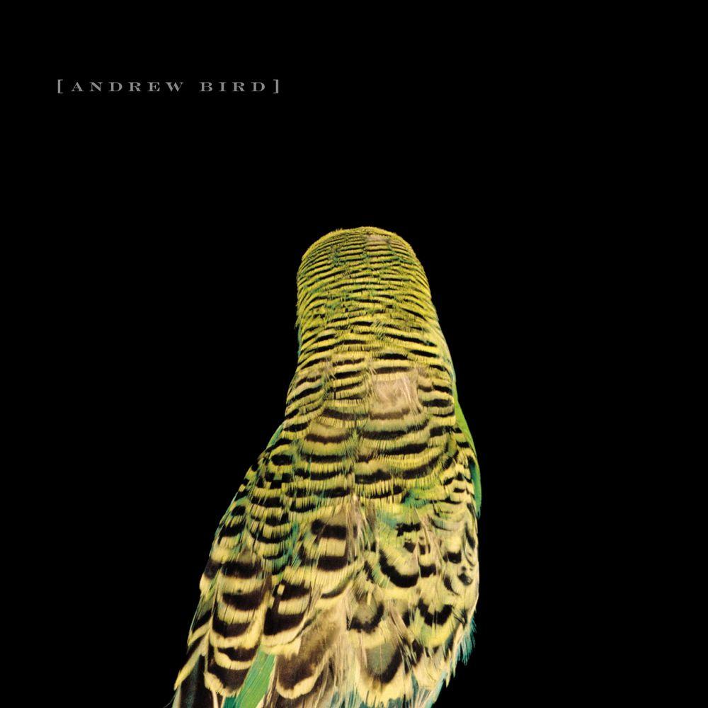Andrew Bird - Armchair Apocrypha | Andrew bird, Birds, Budgies