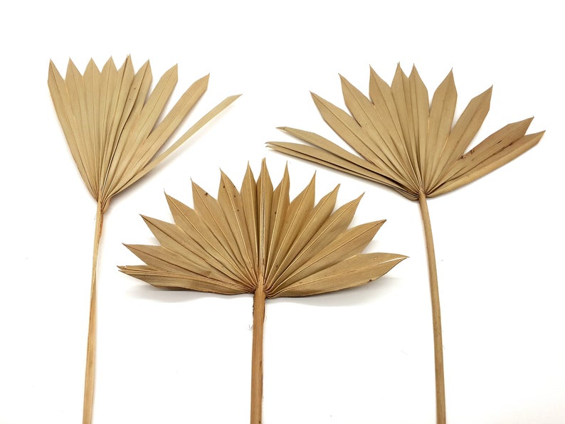 Natural Palm Leaves Dried Palm Leaves Tropical Leaves Large Etsy Palm Leaf Decor Leaf Decor Tropical Leaves