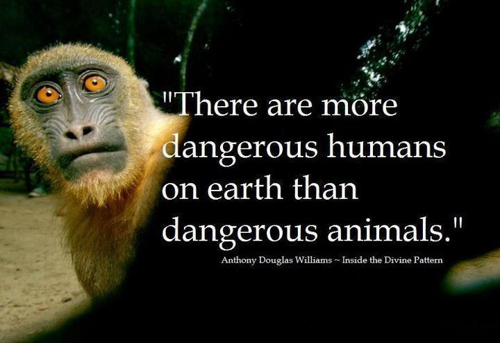 Pro Vegan There Are More Dangerous Humans On Earth Than Dangerous