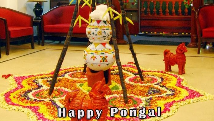 Happy Pongal 2015 celebration and festival picture gallery ...