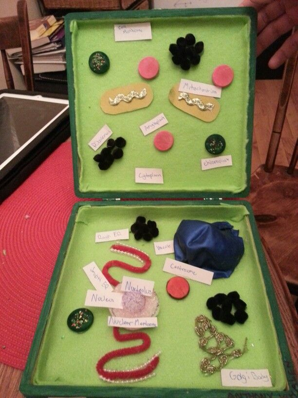 A 3-D model of a plant cell | math and science | Plant cell