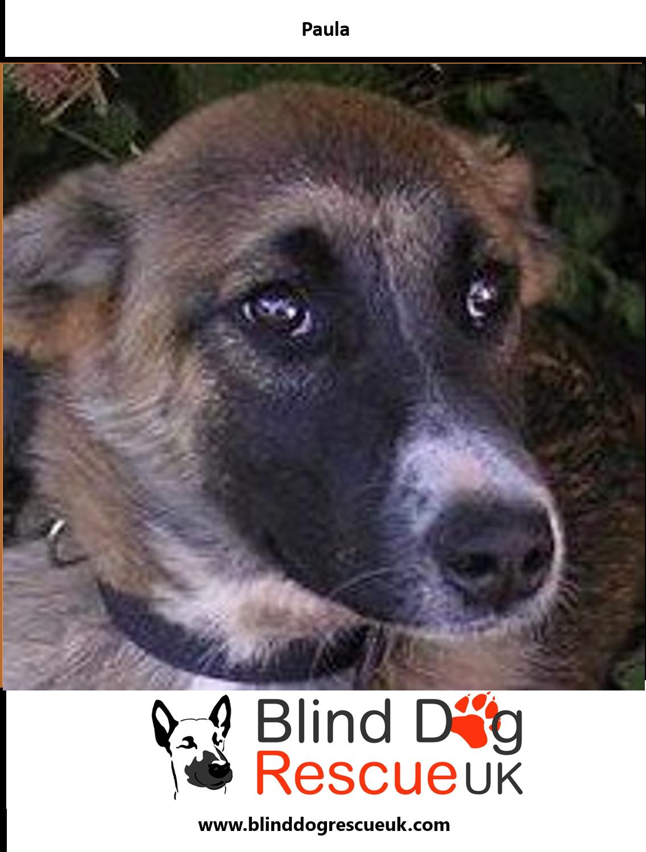 Adopt A Blind Dog Dog Rescue Uk Blind Dog Dogs
