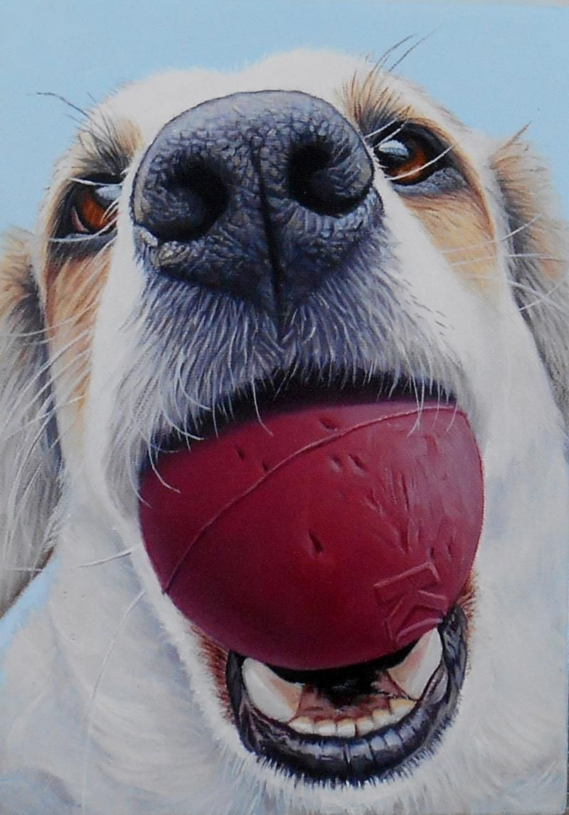 Dog Portrait Gallery Recent Workthis Page Contains A Rotating Selection Of Paintings Completed Within The Past Twel Dog Portraits Canine Art Animal Paintings