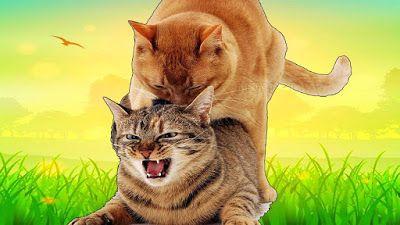 لماذا تصرخ القطة عند التزاوج وتبكي أيضا Cats Animals Cat Lady
