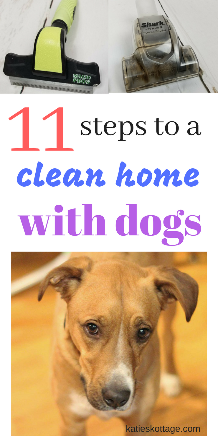 Keeping Your House Clean When You Have Dogs 11 Tips To Keep The Dog Mess And Smells Away Dogowner Cleaningtips