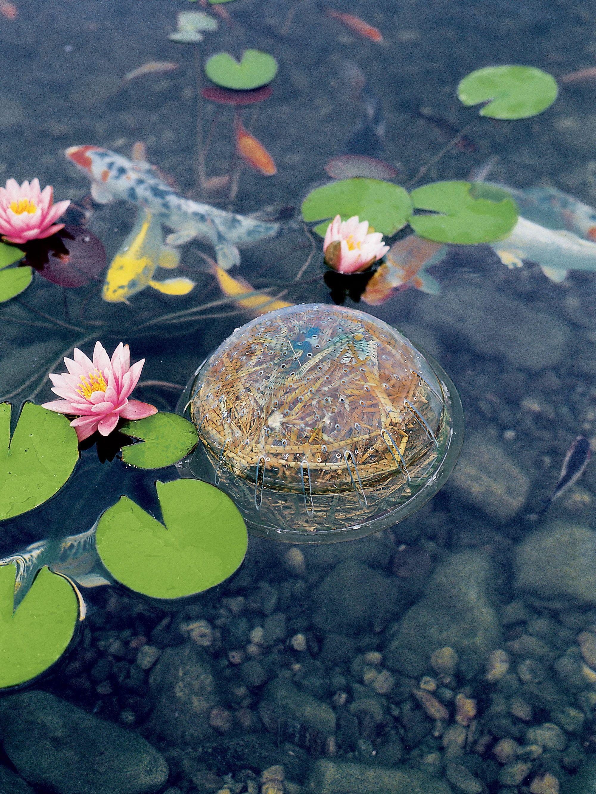 Barley Straw Bales Natural Pond Cleaner Gardeners Com Natural Pond Indoor Water Garden Container Water Gardens