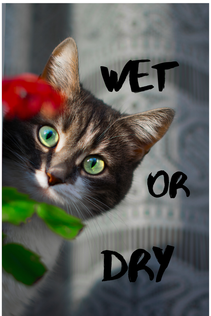 Wet or Dry? Dry cat food, Wet cat food, Animal protein