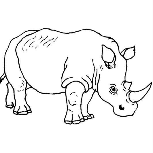 Nashorn Ausmalbild Afrika Projekt Animalitos Para Colorear