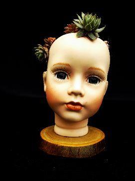 Name - Mercy, porcelain dolls head housing pretty sempervivum plant.