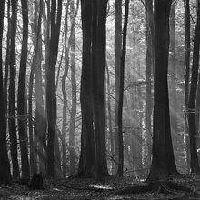 Valokuvatapetti - Fairy Forest
