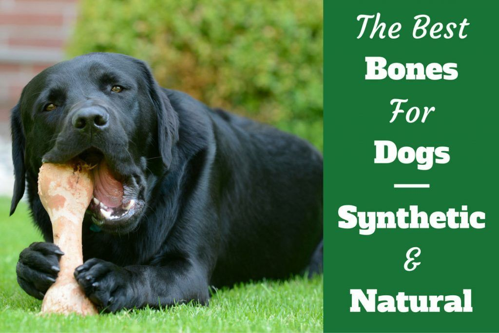 Best Dog Bones Review A Look At Natural And Synthetic Options