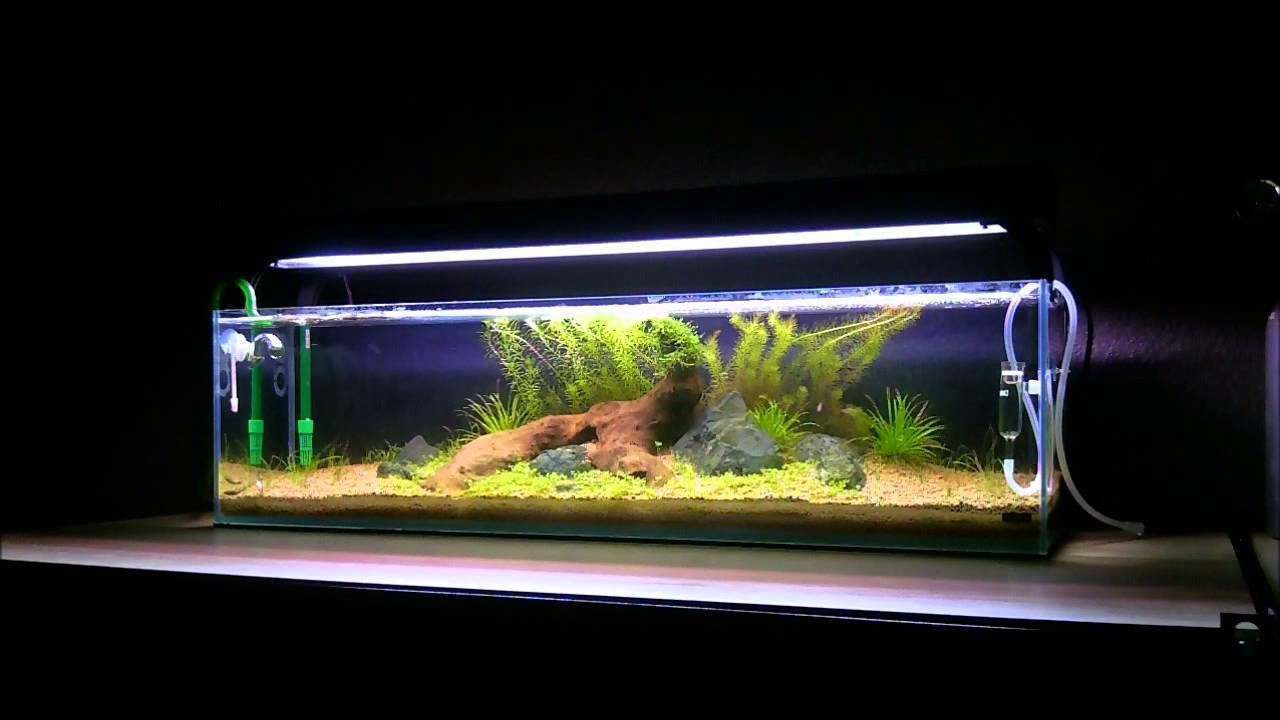 mr aqua 12g long youtube mr aqua 12 gal aquariums
