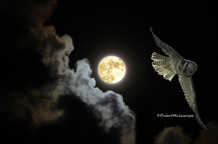 CAUGHT BY THE MOON