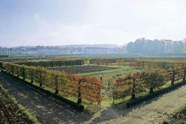 Fruit tree fence