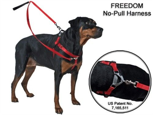 Patented Freedom No Pull Harness Deluxe Dog Training Package 35