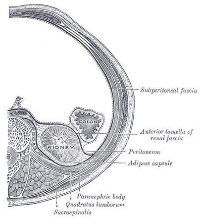 Pin de Ian Bickle en Urogenital Radiology | Pinterest | Radiología