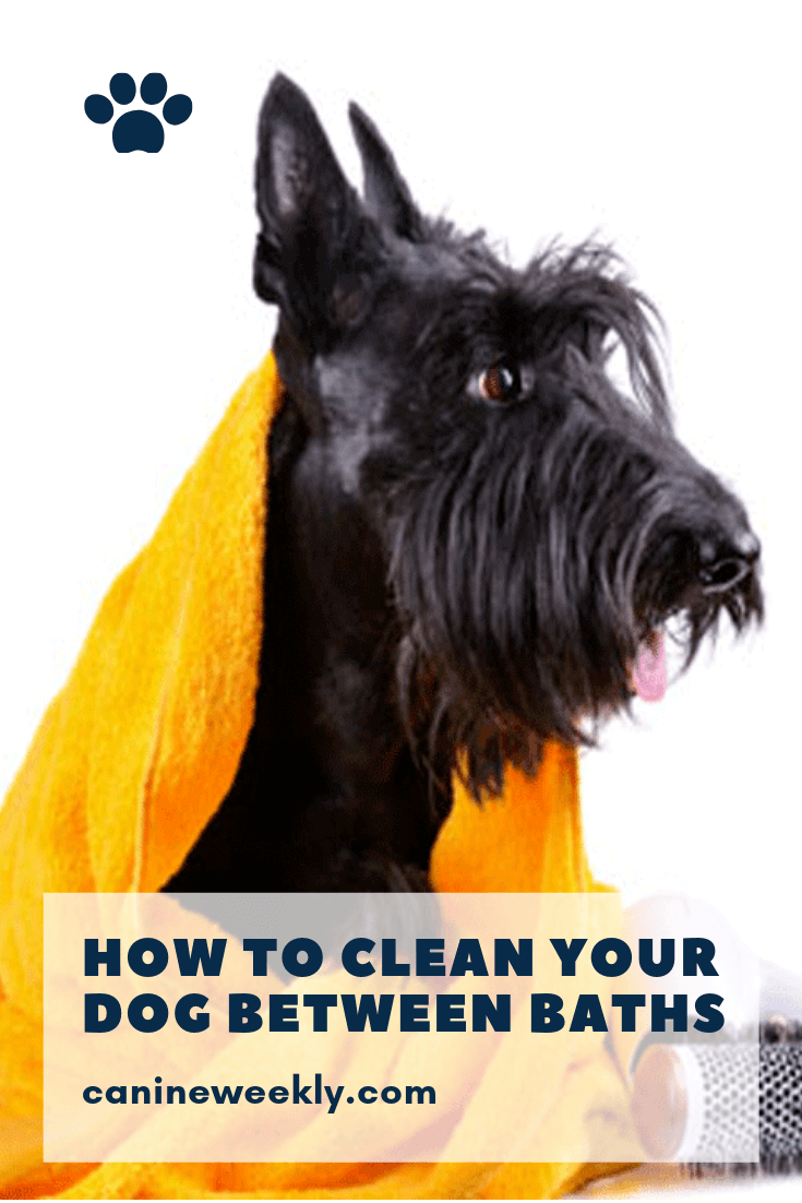 How To Clean Your Dog Between Baths Dog Grooming Tips Dog Training Near Me Chihuahua Puppy Care