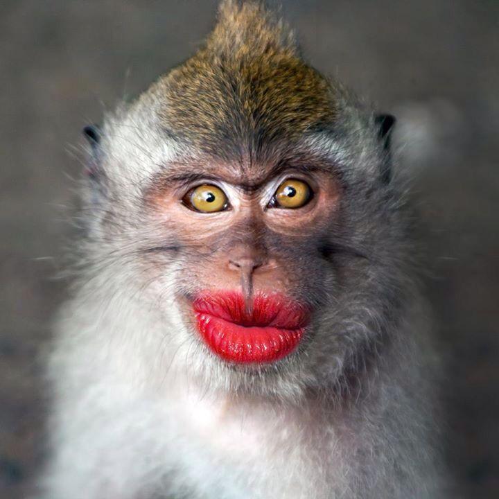 Pucker Up! Haha Funny stuff Pinterest Funny stuff - stock job description