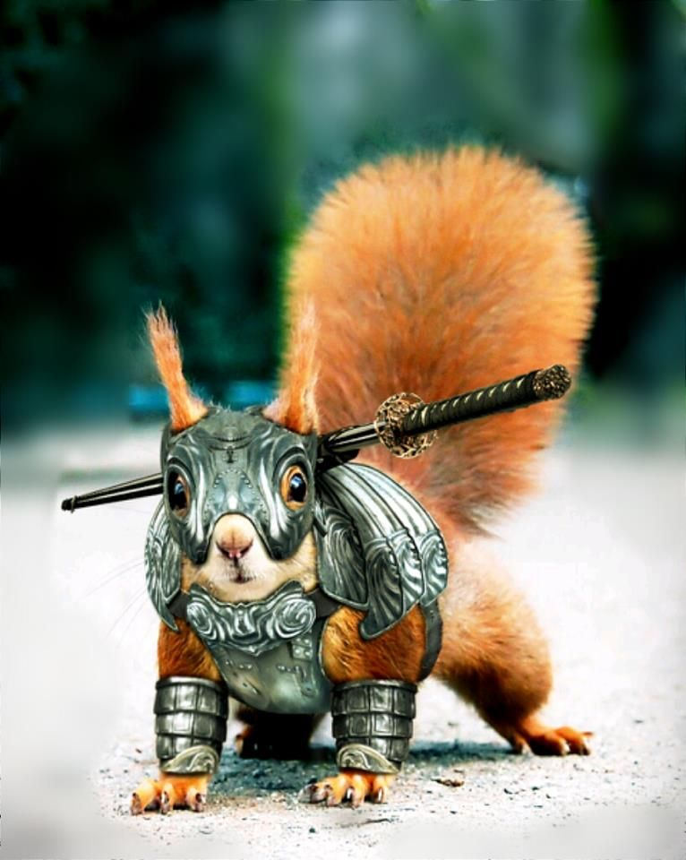 Squirrel Dressed In Armor ANIMAL ANTICS Pinterest Squirrel - Squirrel photographed in heroic pose becomes star of hilarious photoshop battle