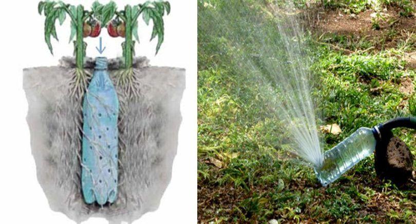 Comment Fabriquer Un Arrosage Automatique Pour Tomates Avec Une Bouteille Cuisine Momix Arrosage Automatique Arrosage Planter Tomates