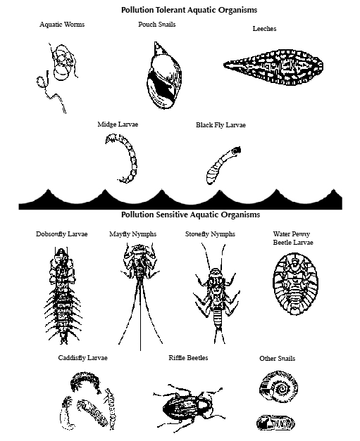 KY Aquatic Indicator Species handout. http://www.state.ky.us/nrepc ...