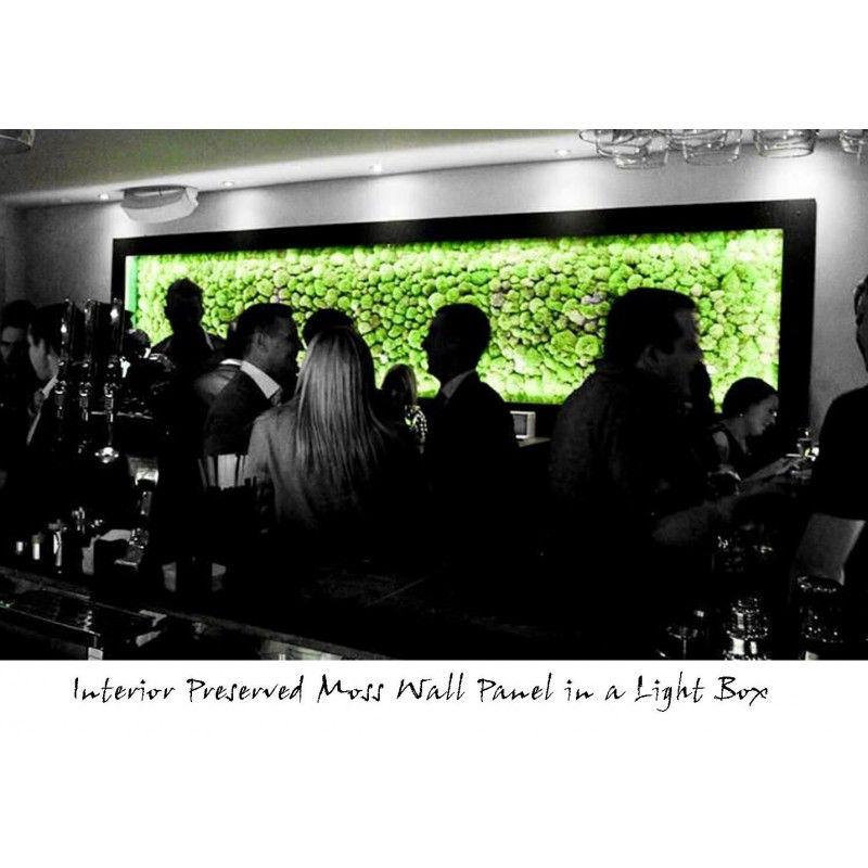 Kluby nocne z zielonym akcentem.
