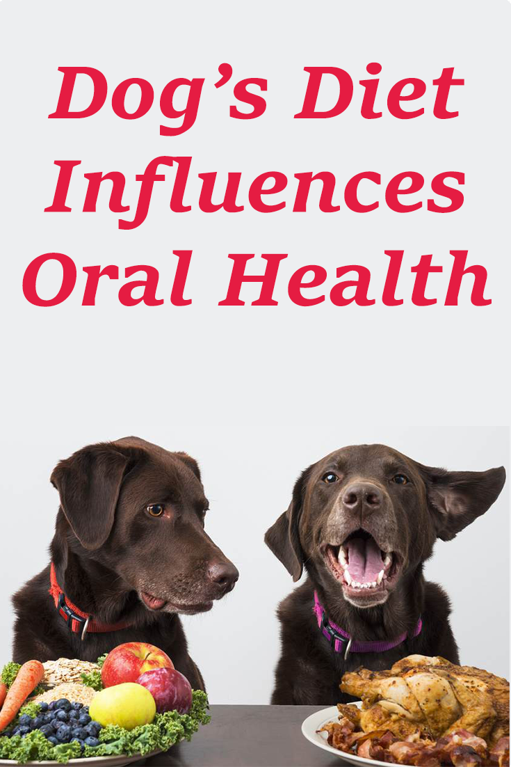 A Dog S Diet Influences Oral Health Dogs Dogcare Puppy Dogsofinstagram Oral Health Oral Care Oral