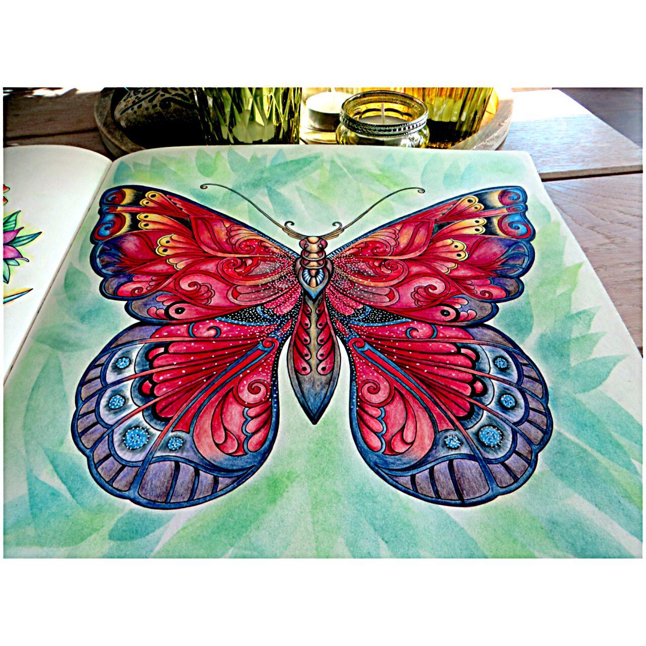big butterfly magical jungle johanna basford tammy coloring