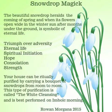 Snowdrop Magic Magical Life Witch Books Witch Rituals