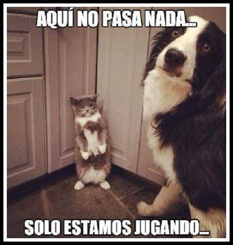 Chistes Del Perro Guarumo Escritos Jpg 478 503 Mascotas Fotos De Perros Gatos