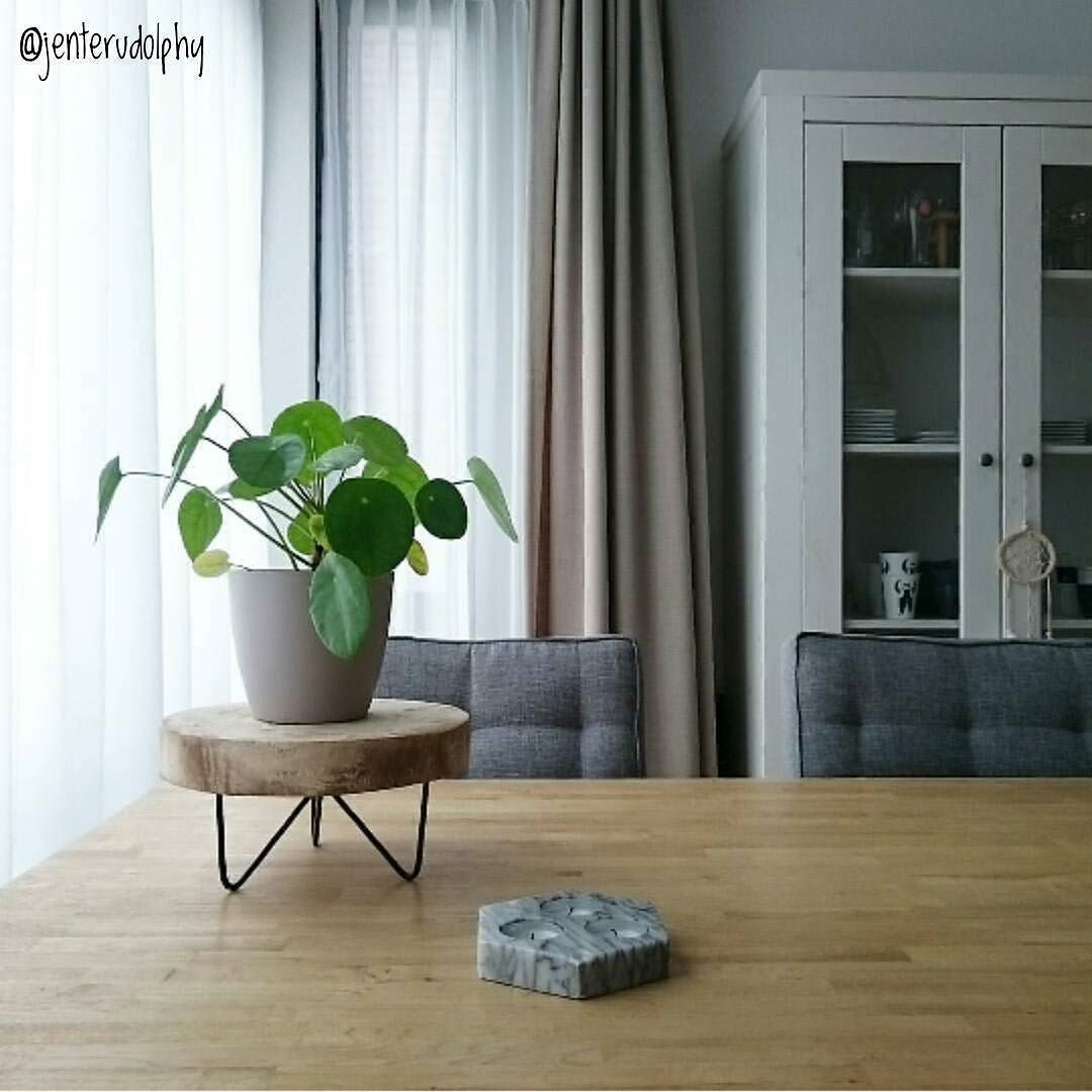 e7334bf759be702cff8a37959e32d180 House Plant Ze on house chemicals, house people, house stars, house vines, house candy, house gifts, house ferns, house design, house nature, house rodents, house decorations, house family, house slugs, house fire, house home, house cars, house flowers, house mites, house crafts, house plans,