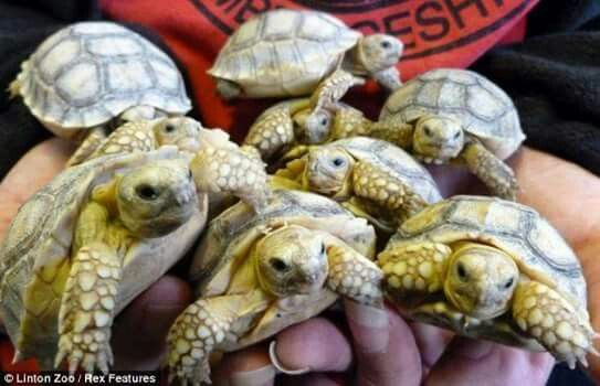 Handful of turtles. ..