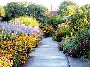Native Kansas Plants In A Natural Landscape Backyard Landscaping