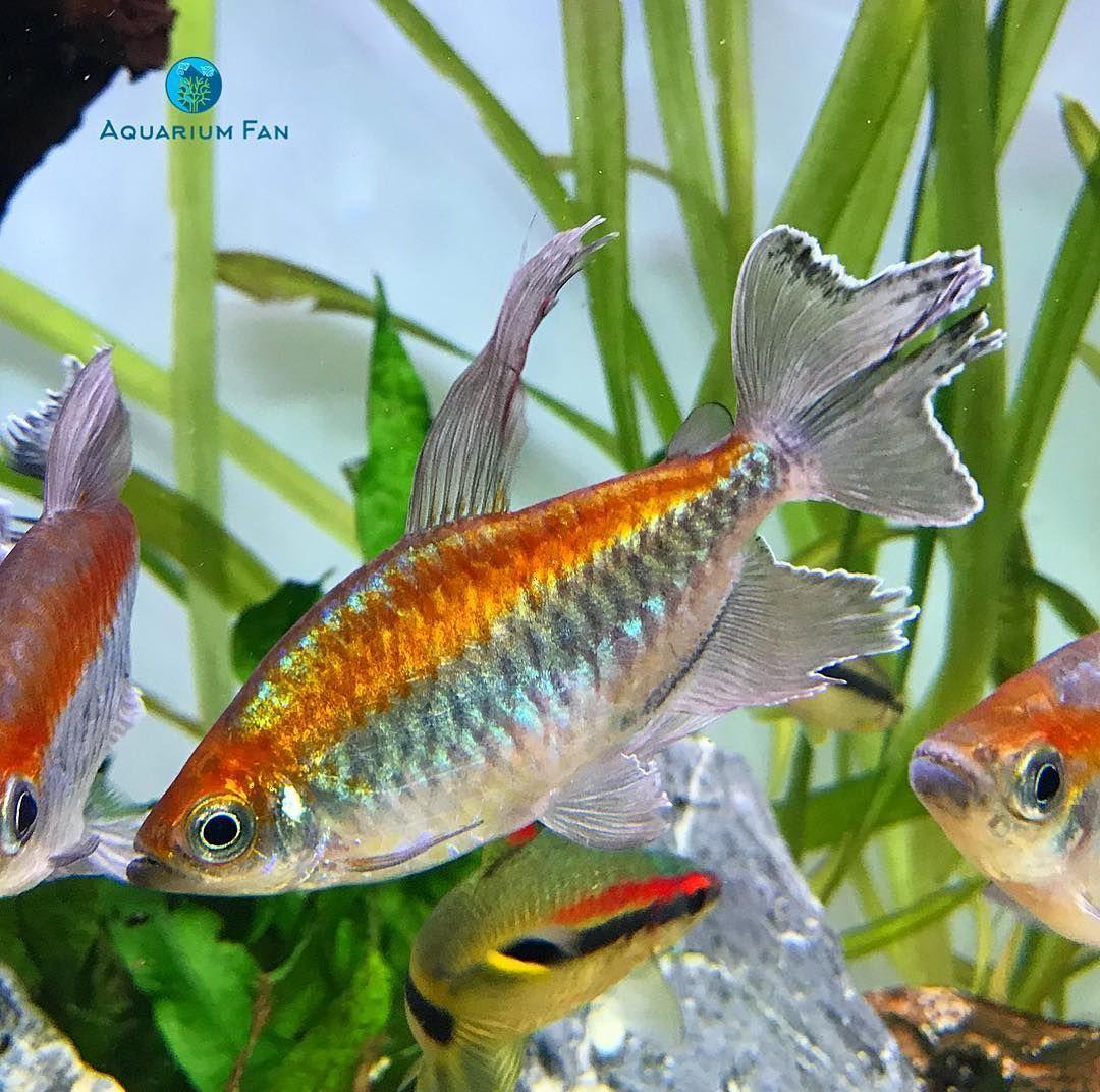 DIY fish tank decorations Themes Aquascaping, Fresh Water Decor ...