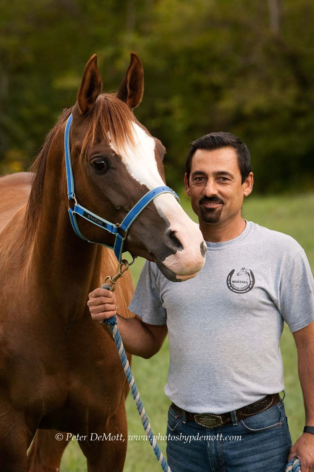 Precious! I love the horses face!   Horses, Horse senior