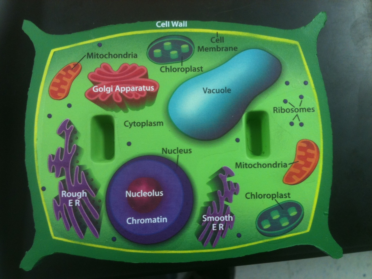Pics Photos Plant Cell Diagram With Labels For Kids
