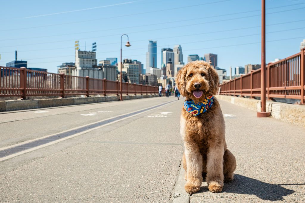 Dogfriendly minneapolis where can i bring my dog