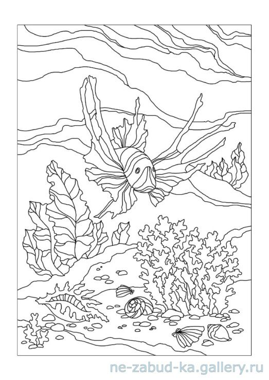 Coloring Books Pages Zentangles Stress Mermaid Shells Fish