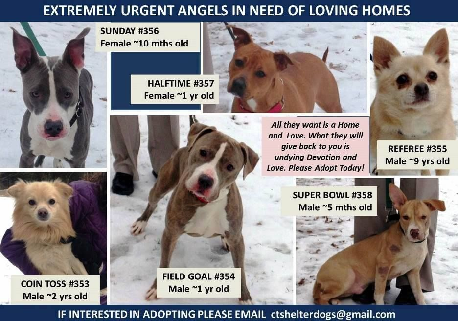 The Davinci Foundation For Animals Rescue Across The Nation Ct Urgent Dos Needing Rescue Hartford Ct If Interested In Adopt Dog Adoption Animals Homeless Pets