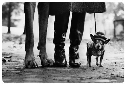 Dog Legs by Elliott Erwitt #Dogs #Elliott_Erwitt seen at Elephante Paname at Paris, IIe arrondissement