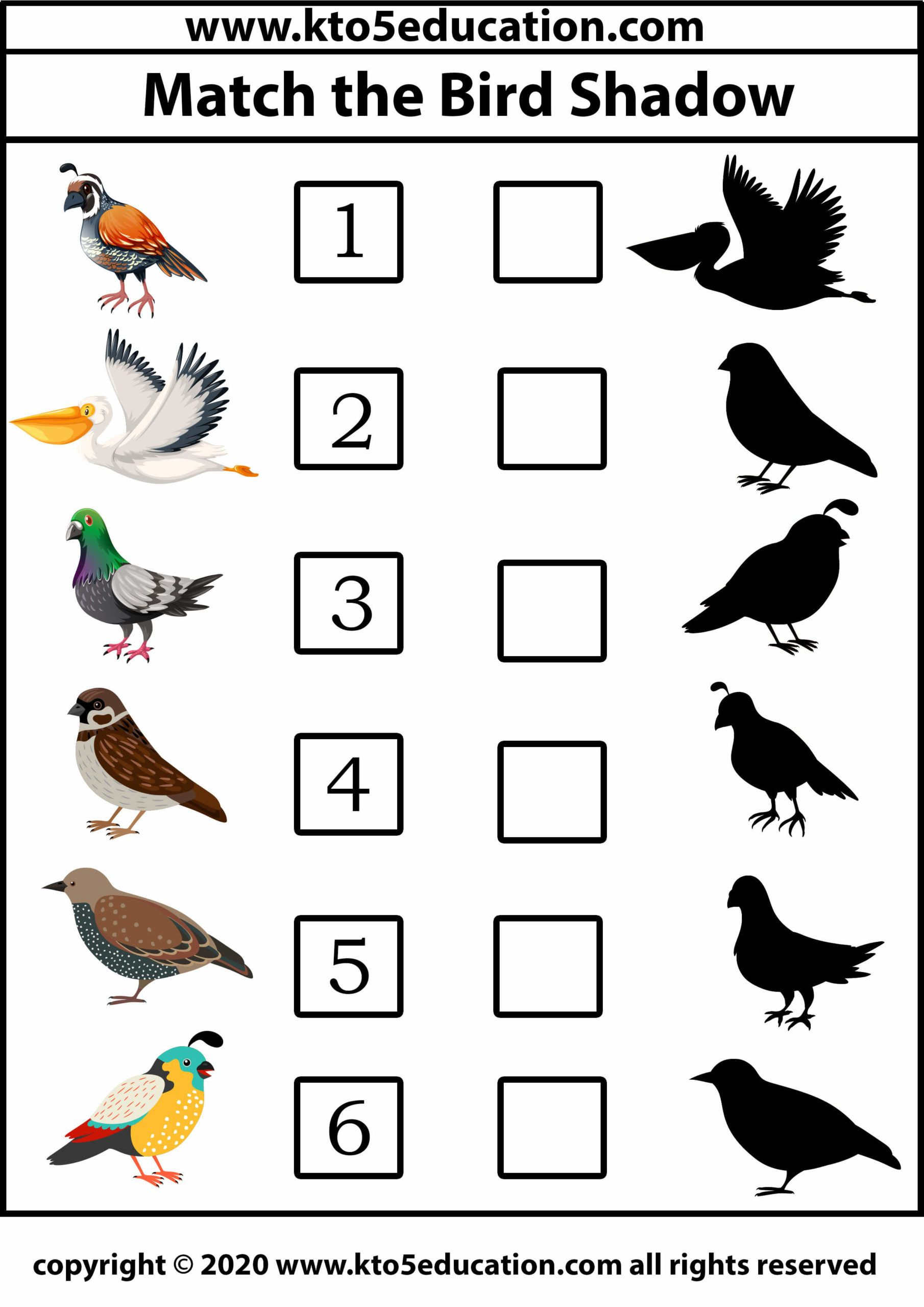 Match The Bird Shadow 2 Worksheet Template In