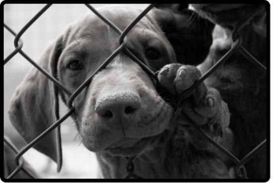 Make A Donation To The Tri County Humane Society In St Cloud Mn In My Name With Images Dog Adoption Shelter Dogs