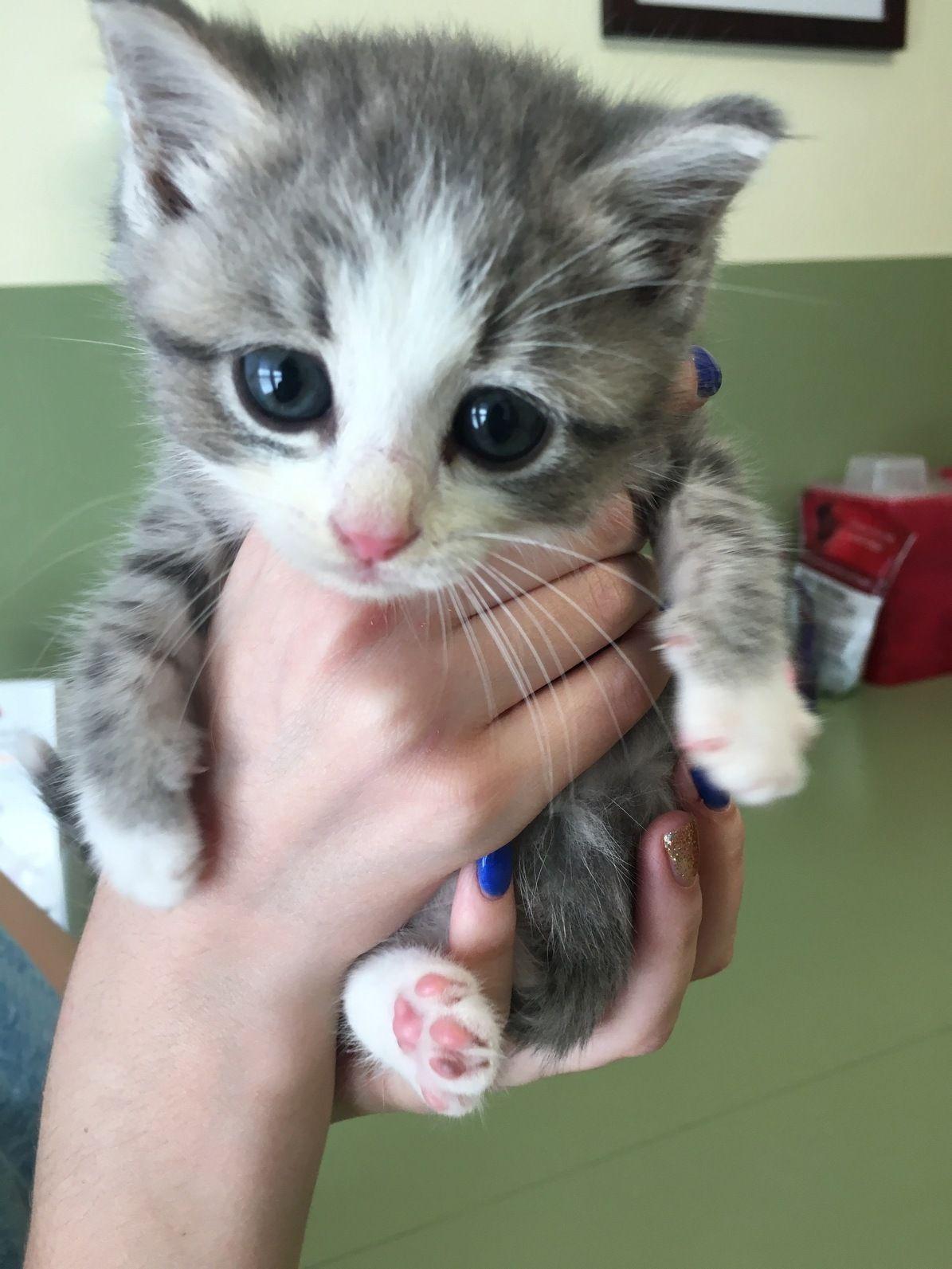 Not a Stuffed Animal, Just My Cat, Gravy Baby cats