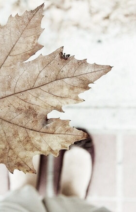 Pin by StyleAspirations on Autumn | Pinterest | Otoño, Otoño ...