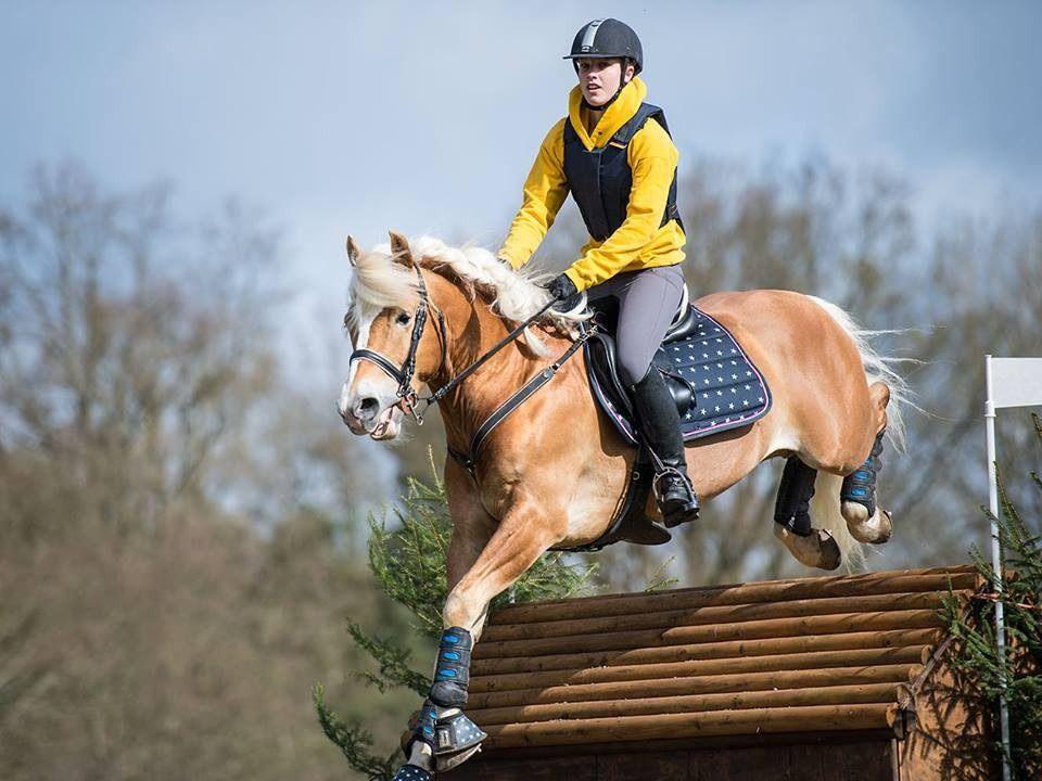 ponylvrxo's blog — Haflinger stallion Anatol L while exercising in...