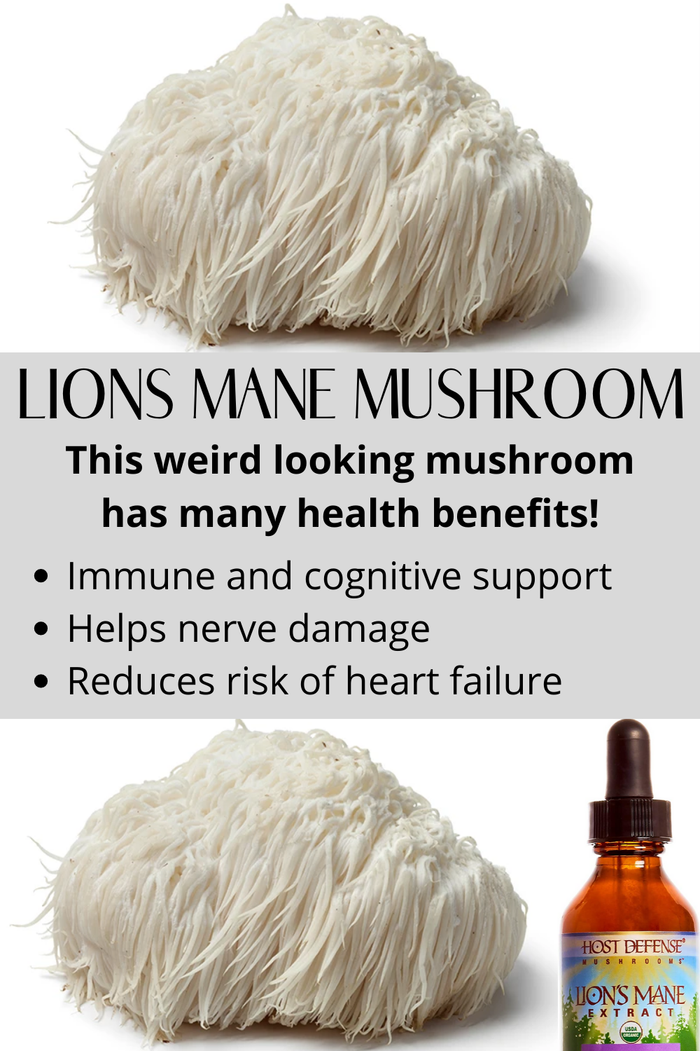 Lion's Mane Mushroom Supplement - The Benefits, Pros, Cons, and Side Effects
