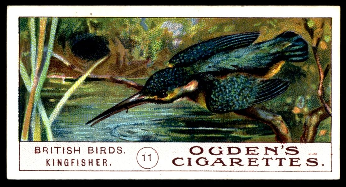 Pin on Cigarette Cards & Other Cards Animals